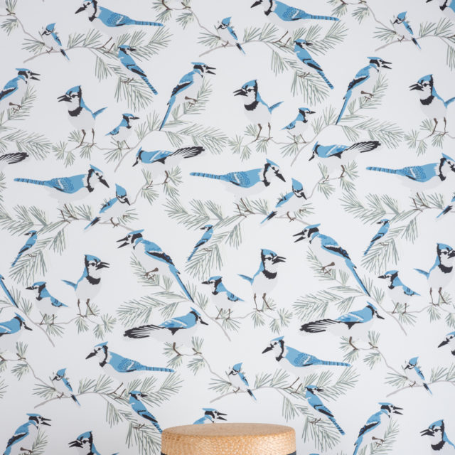 Blue Jay wallpaper / Photography by Johnny C.Y. Lam