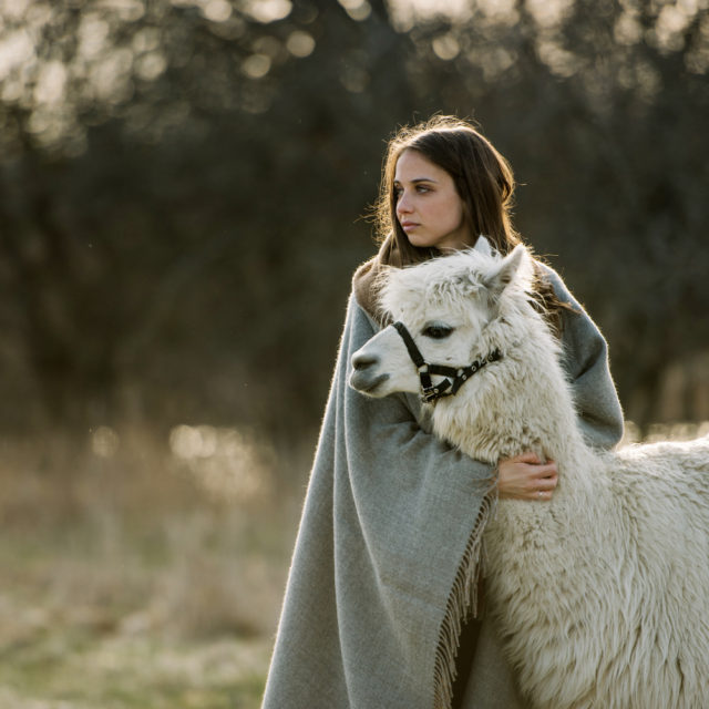 Alpaca at Shed Chetwyn, photographed for their 2017 advertising campaign.