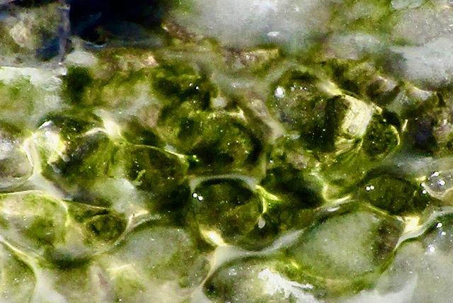 Ice Jewels by Sheila Ascroft