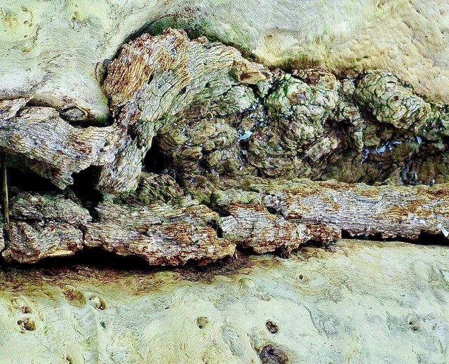 Upheaval at Sandbanks by Sheila Ascroft