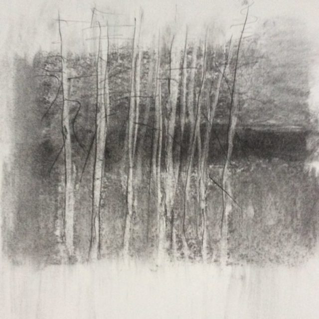 Naked Trees, charcoal on paper