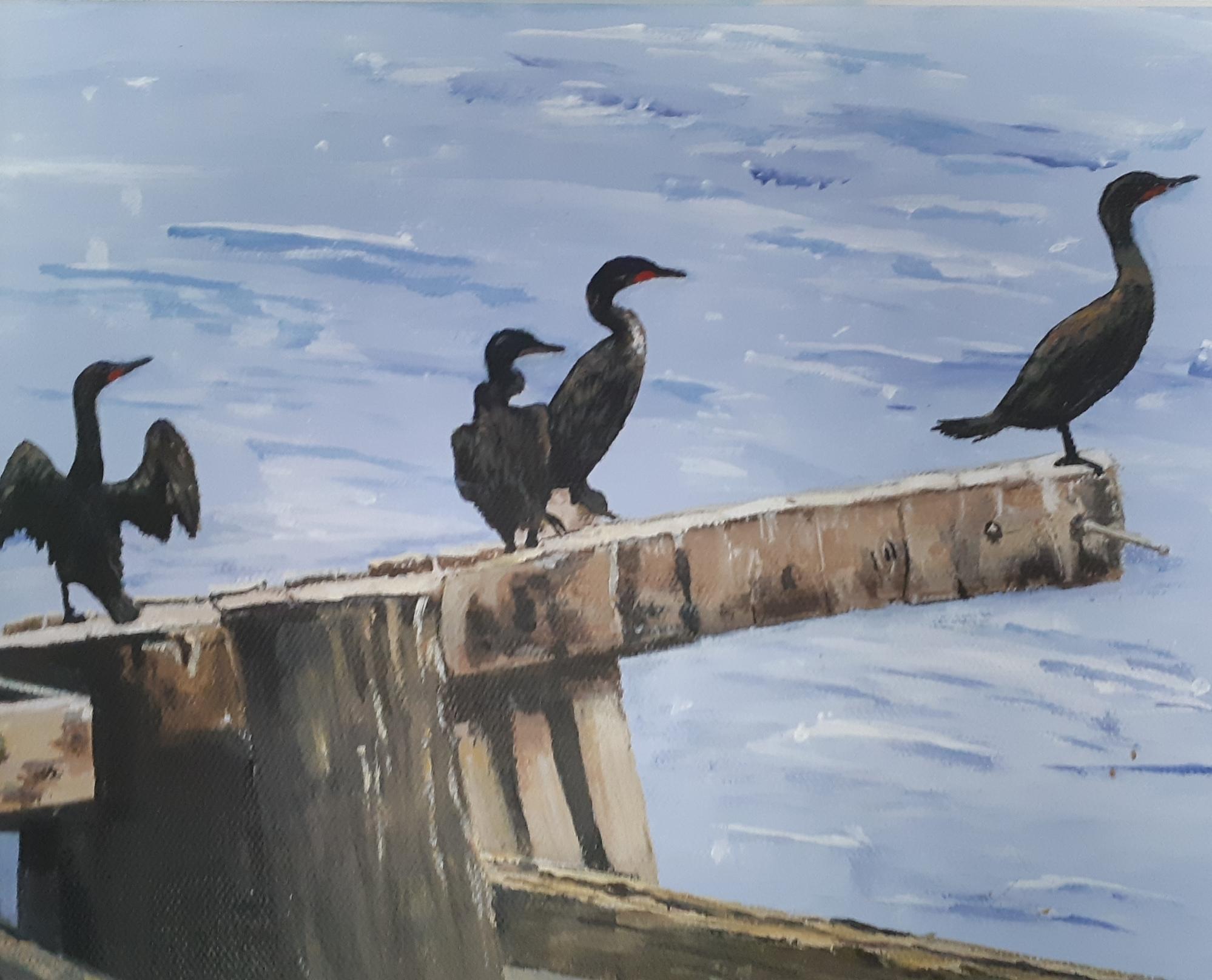 Sunning Cormorants