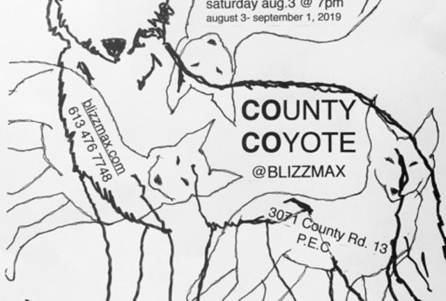 County Coyote