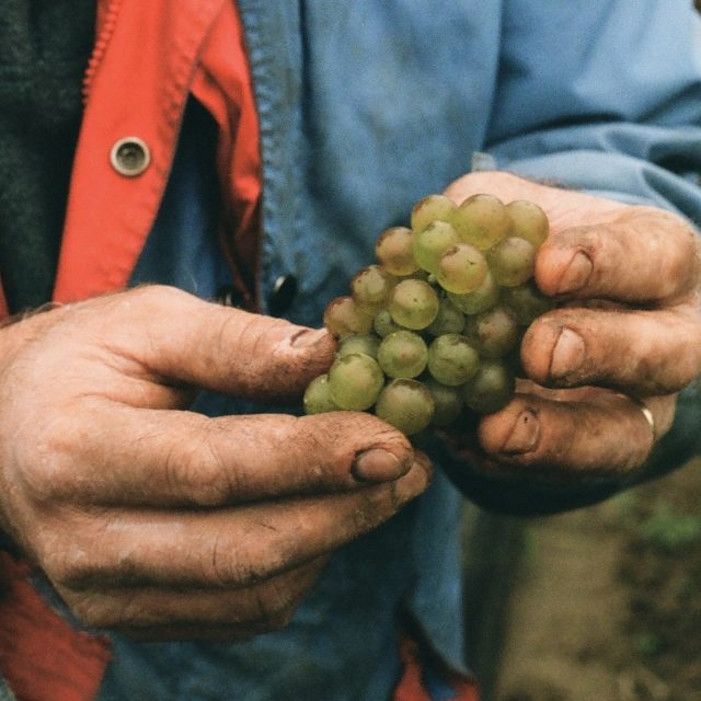 Fruits of Labour (Director): Interplaying the metaphor of grapes, this father-daughter documentary is characterized by the labour of love it is to make wine, but also the labour of love that is love itself.